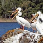 Lake Kabetogama Boat Tours